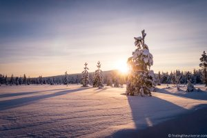 Things to Do in Rovaniemi Finland + Tips for your Visit