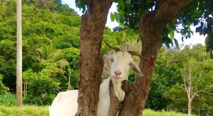 15 Things You Didn't Know About Goats